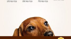 5 Ways Holistic Food Assists in Boosting a Dog's Health