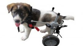 Benefits of Using Pet Mobility Devices
