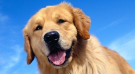 Why Everybody is Raving About Dog Food Secrets