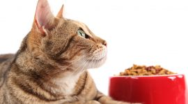 Five Important Considerations To Check Before Purchasing Cat Food