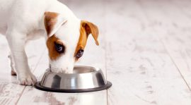 Advantages of All Natural Over Canned Dog Food